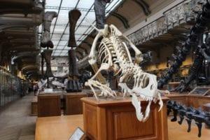 Dinosaur bones in museum_picture by Adam-Mathieu